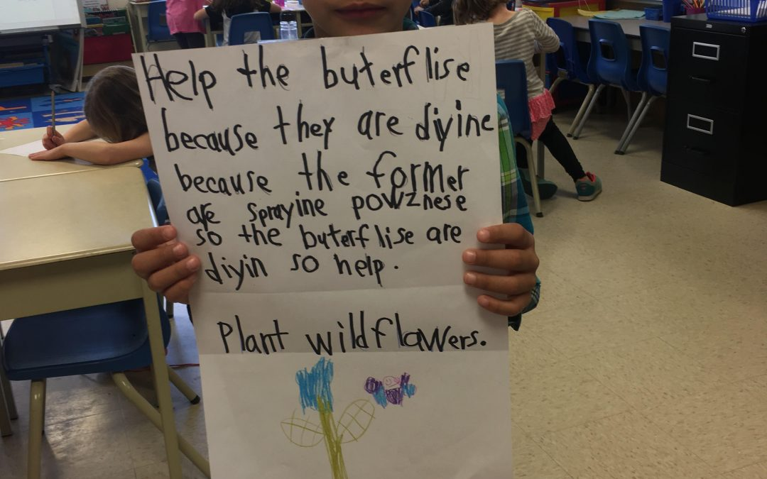 Saving the Bees at Stirling Public School
