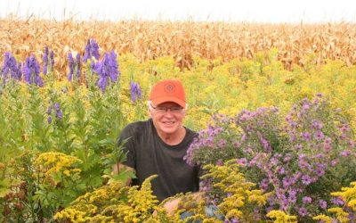 Pollinators Thrive on David's Farm