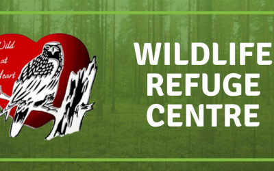 Wild at Heart: Wild About Wildlife and Pollinators!