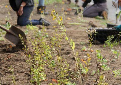 Niagara Falls - pollinator-friendly planting