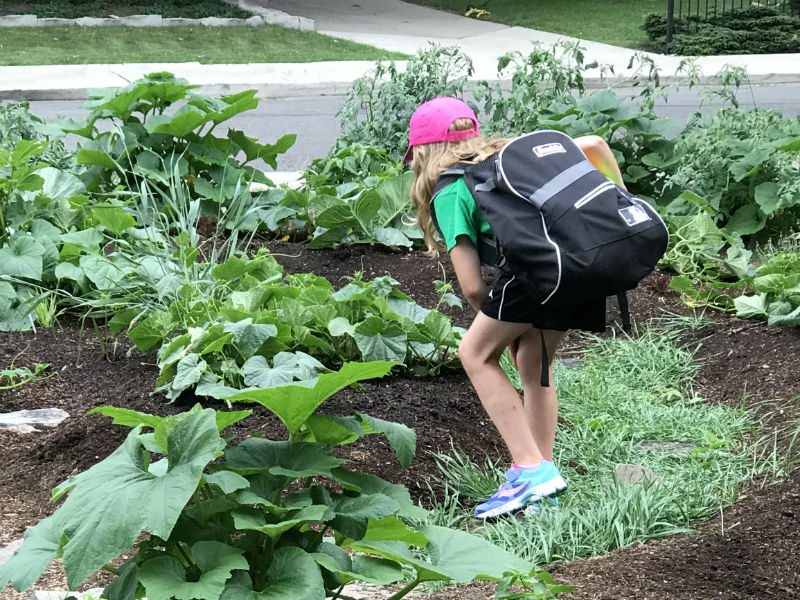 Student spies something in the veggie patch.