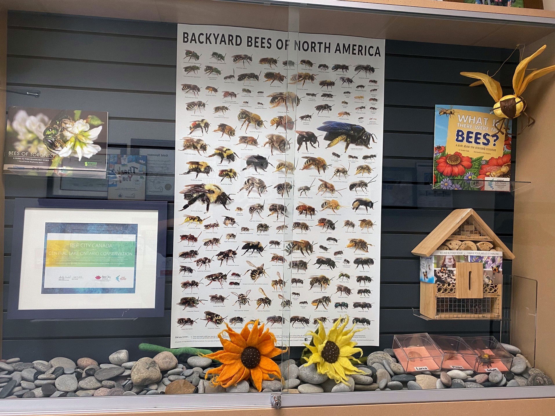Central Lake Ontario Conservation display