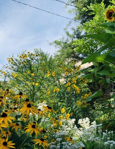 Lush Pollinator Garden