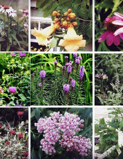 Pollinator Garden Collage