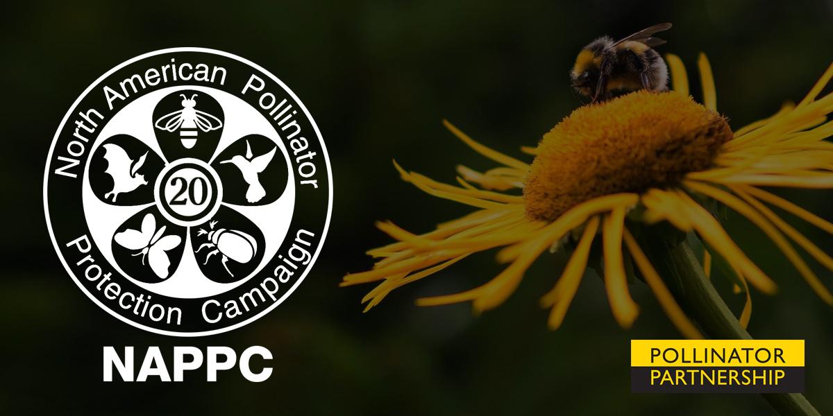 NAPPC Award Canada