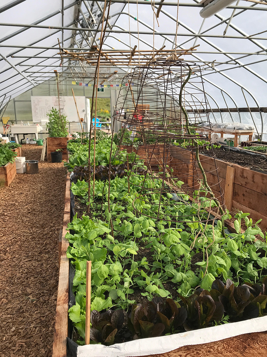 Davis Bay Greenhouse