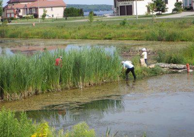 Invasive Species Removal