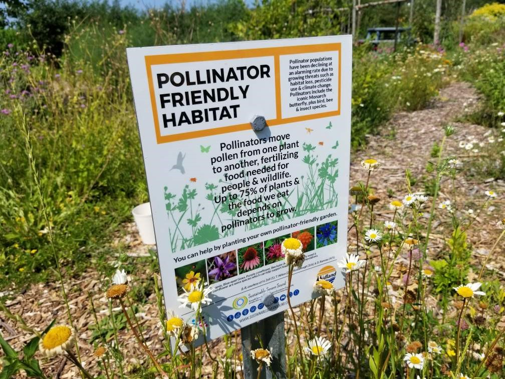 Pollinator Friendly Habitat
