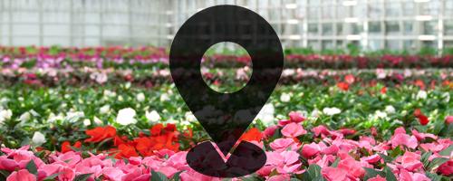 Find Native Plant Nurseries