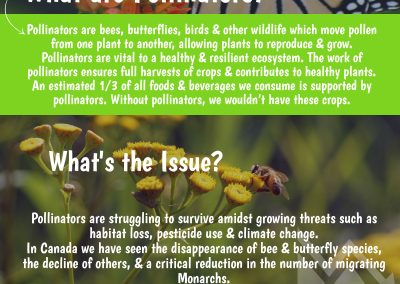 Pollinator Week 2017 Newsletter