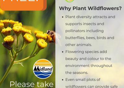 Midland Seed Poster 2017-2018