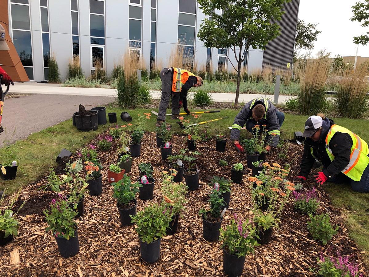 Okotoks Planting